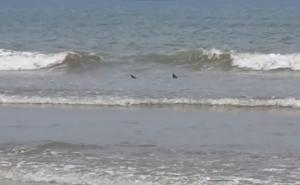 Cocoa Beach Shark and Jellyfish Report For May 5, 2017